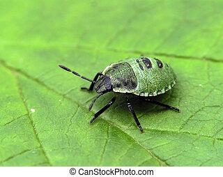 jonge, groen insect