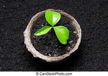 jonge, groene, spruit, in, de, pot, met, de, grond