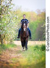 jonge man, paardrijden, een, paarde