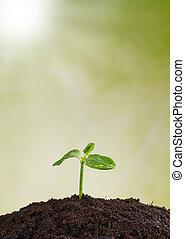 jonge plant, in, aarde, concept, van, nieuw leven