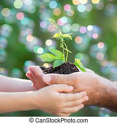 jonge plant, in, handen, tegen, groene achtergrond