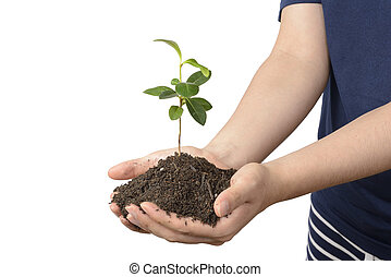 jonge plant, met, terrein, op, handen