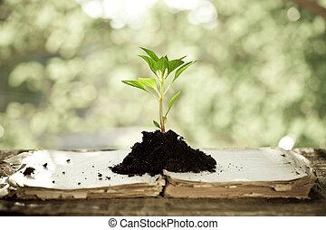 jonge plant, tegen, natuurlijke , achtergrond
