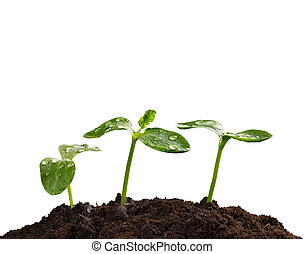 jonge, planten, in, aarde, concept, van, nieuw leven