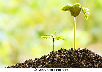 jonge, twee, plant