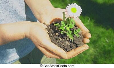 jonge vrouw , vasthouden, een, bloem, in, haar, hands.