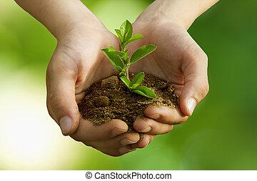 jongen, in, boom planten, milieubescherming