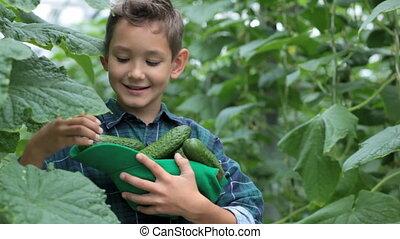 jongen, met, komkommers