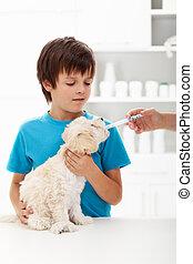 jongen, weinig; niet zo(veel), zijn, arts, veeartsenijkundig, doggy