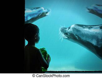 jongetje, op, dierentuin, met, zee leeuwen, in, water