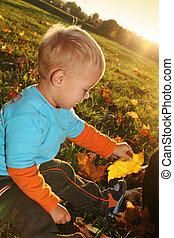 jongetje, spelend, met, gele, autumn leaves, in het park