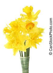 jonquille, closeup, arrangement fleur