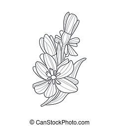 Dessin croquis jonquille fleur main croquis - Dessin jonquille fleur ...