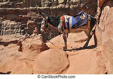 Jordanian Donkey at Petra