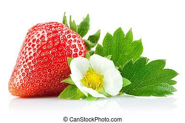 jordgubbe, bär, med, grön leaf, och, blomma