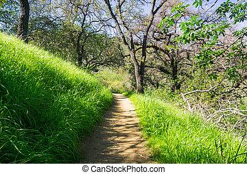 jose, zona, francisco, colline, hiking traccia, teresa, baia, parco contea, california, santa, sud, san