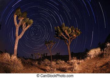 joshua, califo, tiro, senderos, parque nacional, árbol, noche, estrella