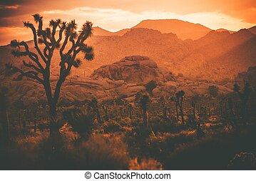 joshua, california, deserto, albero