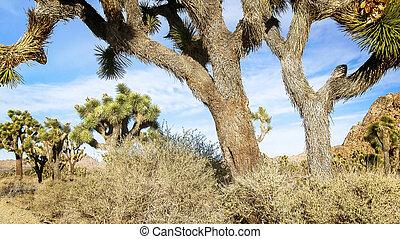 joshua, mojave, árvore, deserto