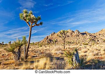 joshua, nacional, árvore, parque, califórnia, deserto mojave