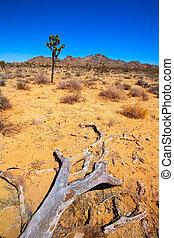joshua, parque, árbol, nacional, mohave, california, valle,...