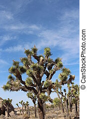 Joshua Tree California USA