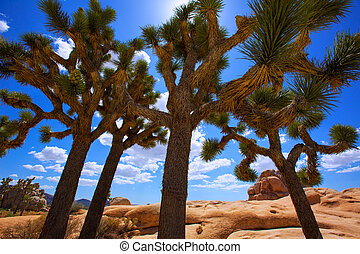 Joshua Tree National Park Yucca Valley Mohave desert California