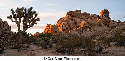Joshua Tree Sunrise Cloud Landscape California National Park