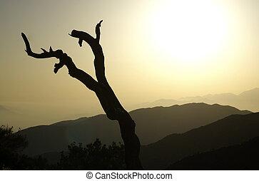 Joshua Tree Sunset Silhouette