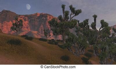 Joshua trees and rocks at sunset