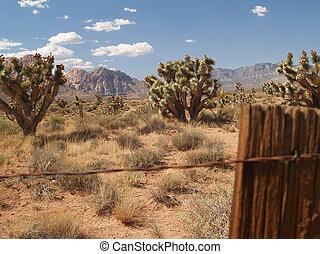 Joshua trees over the fence.