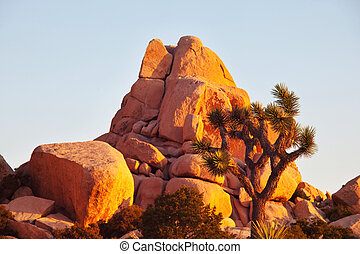Unusual joshua tree national park landscapes, USA