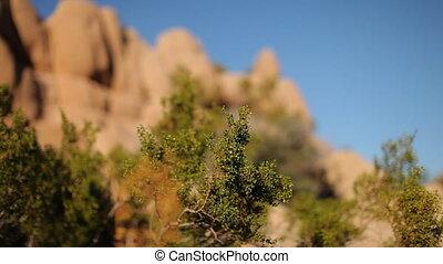 joshua, usa, national, arbre, parc, formation, rocher, californie