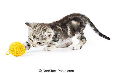 jouer, chaton