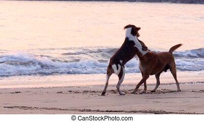 jouer, chiens