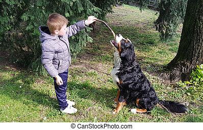 jouer, enfant, parc, chien, jeune