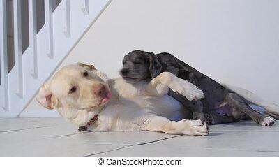 jouer, vieux, trois, chiot, chien