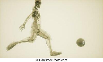 joueur football, visible, balayage, monde médical, os