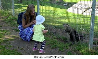 jouir de, rat musqué, animaux, ondatra, zoo, mère, girl, enfantqui commence à marcher, zibethicus