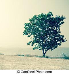 jour, arbre, solitaire, filtré, image:cross, été, proces, ...