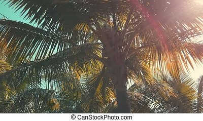 jour, arbres., ensoleillé, regarder, paume haut, arbres