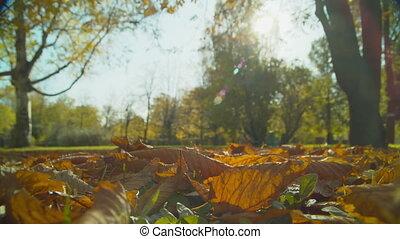jour automne, parc, ensoleillé