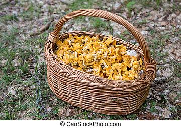 jour, champignons, bon, forêt, entiers, très