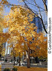 jour ensoleillé, automne