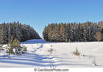 jour ensoleillé, hiver, clairière, forêt
