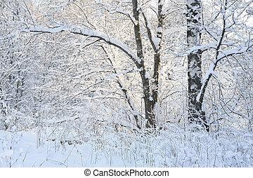 jour, neige-couvert, hiver, forêt