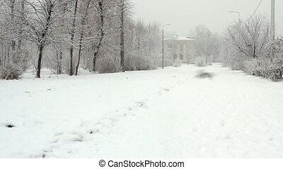 jour, parc, hiver, ruelle, neigeux