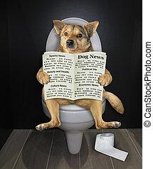 journal, 2, chien, toilette