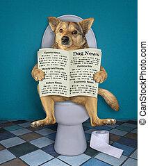 journal, toilette, chien