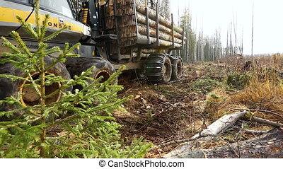 journaux bord, chargé, camion, forêt, par, mouvements